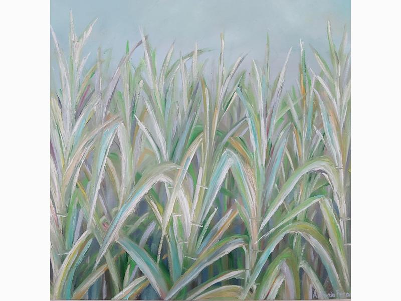 Sugarcane Bright Lights